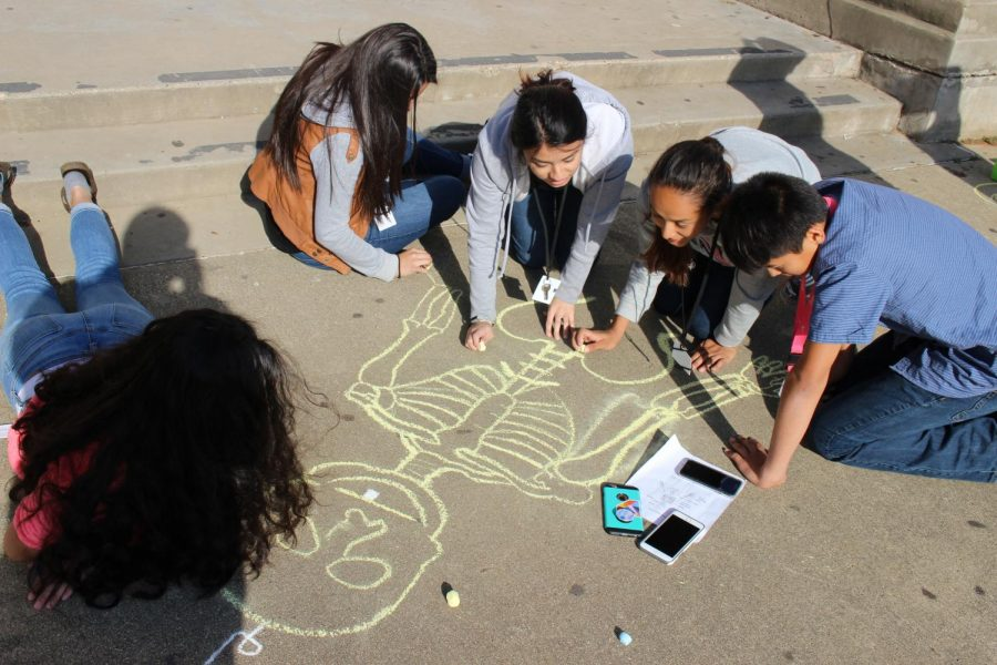 The Principles of Health Science students draw skeleton on the front pavement of the school.